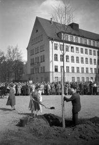 Baumpflanzung im Schulhof der Wildermuth-Schule aus Anlass des Wiedereinzugs, 19. April 1955